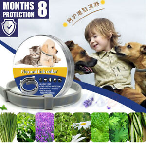 Flea-amp-Tick-Collar-for-Small-Dogs-under-8kg-18-lbs-and-Cats-38cm-8-Month-protect