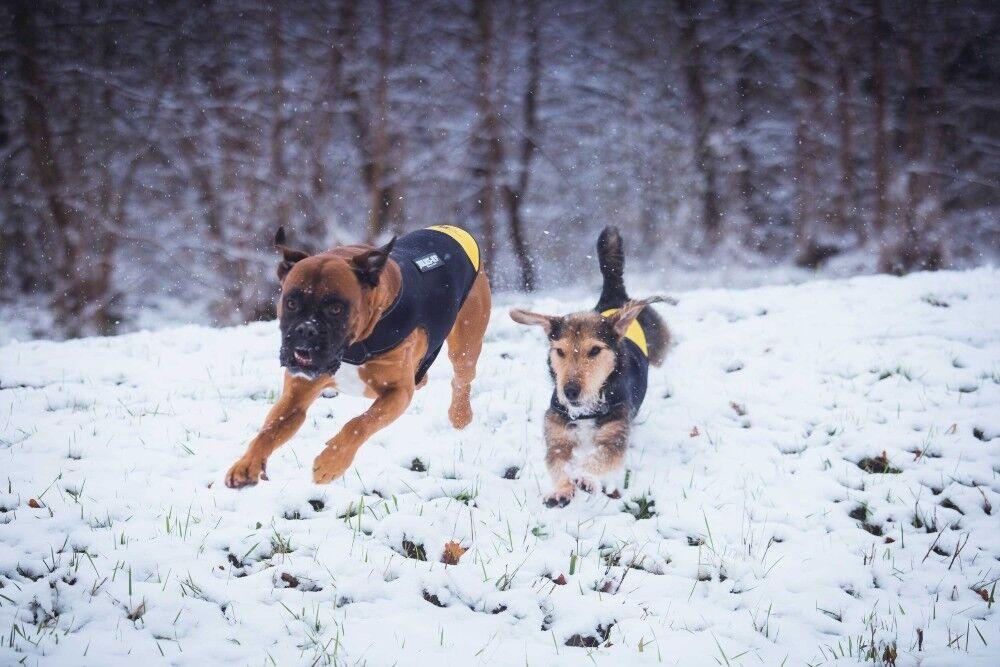Julius-K9 Idc Neopren Lätzchen Thermal Thermal Thermal für Hund Wasserdicht Hundemantel Schnee       Sehr gute Farbe  7d5659