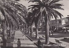 VIAREGGIO - Viale di Palme 1956