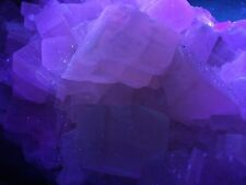 KB: NICE! MUSEUM SIZE SW FL. PINK CALCITE XLS. FROM ITALY