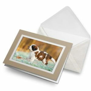 Greetings-Card-Biege-Fluffy-St-Bernard-Puppy-Dog-Pet-24134