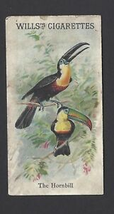 WILLS-ANIMALS-amp-BIRDS-THE-HORNBILL