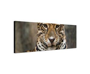 120x40cm-Jaguar-Gefahr-Wildnis-Dschungel-Pelz-Tier-Keilrahmen-Leinwand-Sinus-Art