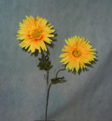 Gerbera gelb  Gerberazweig mit zwei Blüten Spinnengerbera