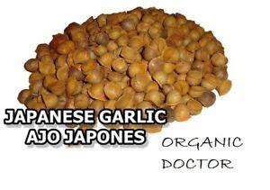 Ajo Japones Japanese Garlic 100 Natural 150 Per Bag Ebay