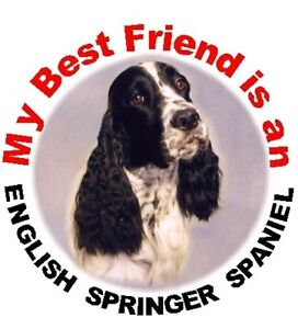 2-English-Springer-Spaniel-No4-Car-Stickers-Starprint