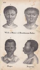 Menschenrassen Afrikaner Buschmann LITHOGRAPHIE von 1831 Brüggemann Schinz