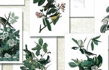 Wallpaper Botanical Audubon Birds Green Cream Brewster 230-33801 DOUBLE ROLLS