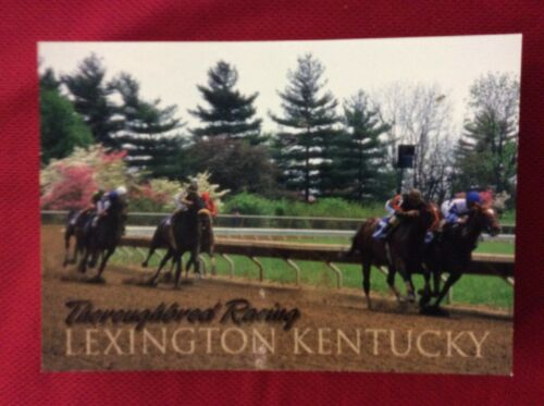 KEENELAND RACE IN KENTUCKY POST CARD WAREHOUSE FIND NOS LOT OF 50 CARDS NEW