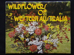 Wildflowers-Of-Western-Australia-A-Pitt-Card-View-Folder-Postcard-P232