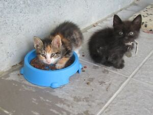 FEED-A-Cute-CYPRUS-Cat-sanctuary-CAT-KITTEN-FOR-CHARITY
