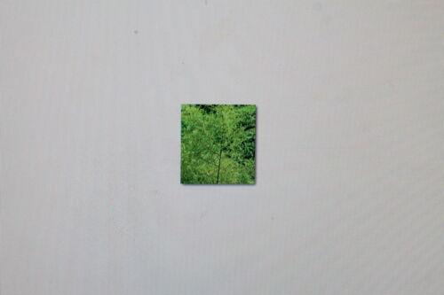 Besenbeifuß 2 x 10 Samen Yin Chen Artemisia scoparia # 166