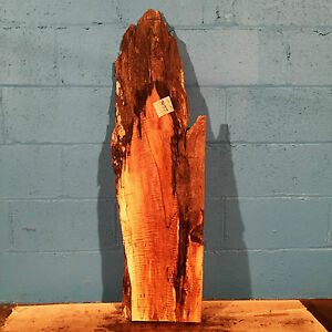 """#7477, spalted Tiger Maple Live Edge Slab lumber wood L 40"""" W11 1/2"""" T 1 7/8"""""""