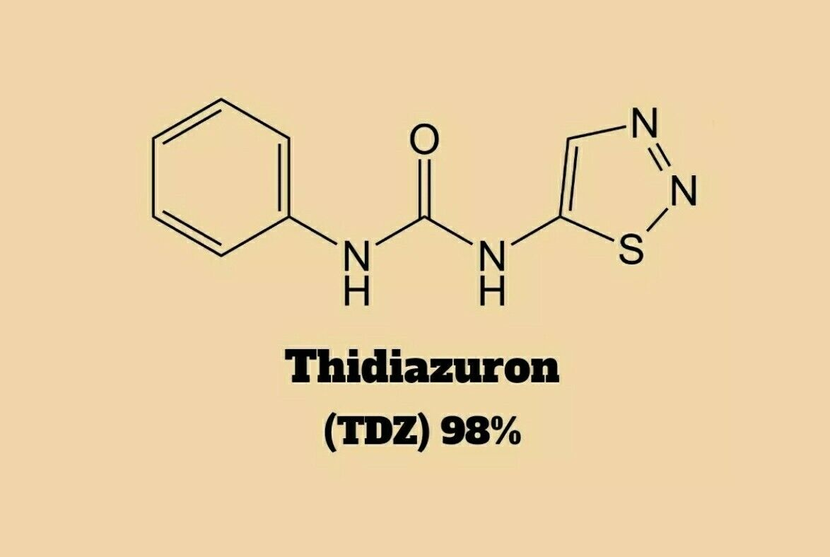 1g Thidiazuron TDZ 98%. Stop Overpaying. Higher/Better Quality Than Caissonlabs