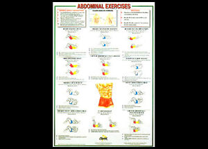 professional fitness wall chart abdominal exercises abs