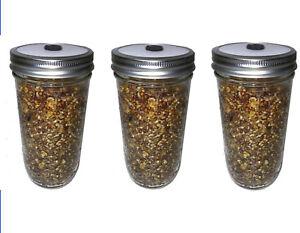 Details about 3 Quick Colonizing 5-Grain 24oz Mushroom Spawn Jars - Grow  mushrooms in Bulk!