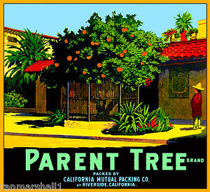 Riverside Mission Inn Parent Tree Orange Citrus Fruit Crate Label Art Print