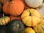 20-Seeds-Pumpkin-Pepitas-Gourd-Cucurbita-Rare-Vegetables-Edible-Organic-Gardens thumbnail 2