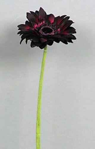 Set De Soie Fleur Art Fleur 45 cm Aubergine Violet 12038-6 f11 12 x Gerbera 12tlg