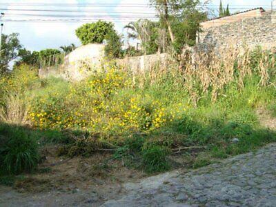 Venta Terreno Privada con Vigilancia, Densidad H05, Que Pueden Cambiar, Col. Palmira, Sur
