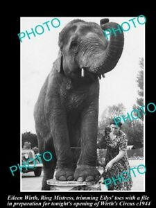 OLD-LARGE-HISTORIC-PHOTO-OF-WIRTHS-CIRCUS-ELEPHANT-GETTING-A-TOE-FILE-c1944