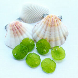 2 Sea Glass Sand Dollar Pendants Cultured with Drilled Hole 21mm U033