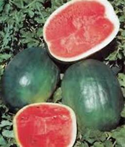 Watermelon Seeds Black Diamond Watermelons Seeds Organic Non GMO Heirloom