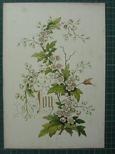 1848 PRINT ~ HAWTHORN - JOY - FLOWERS AND THEIR KINDRED THOUGHTS