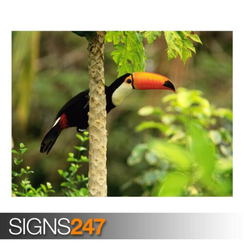 Toucan toco in the Tropical 3603 Animal Poster-Poster print ART A1 A2 A3 A4