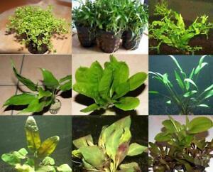 50 Pots De Plantes Aquatiques, 15 Espèces, D'aquarium, Fr