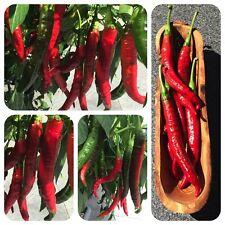 Verato rote Paprika aus Spanien Chili ohne Schärfe f. Pimenton de la Vera dulce