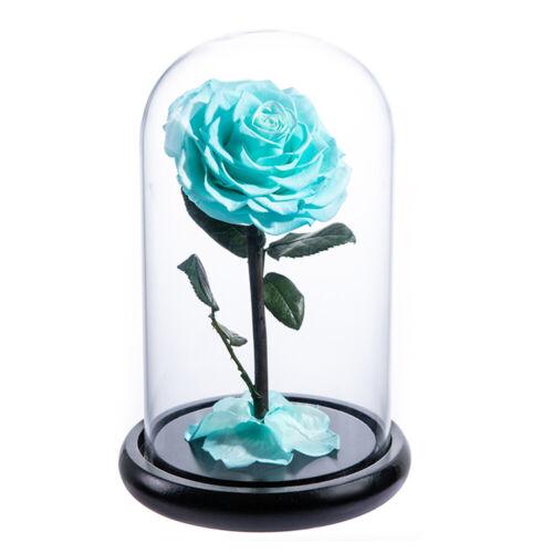 Eternal Rose Flower in Glass Preserved Rose Immortal Romantic Gift Home Decor US
