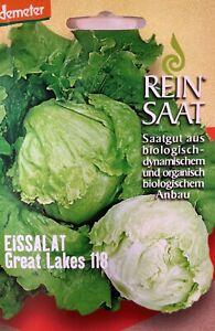 Eissalat-Eisbergsalat-Saatgut-Samen-Demeter-aus-biologischem-Anbau