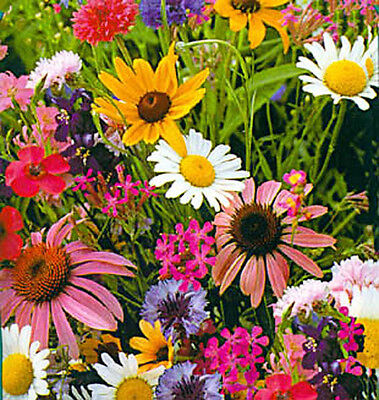 1 gram of seeds Snapdragon Zinnia Larkspur Aster Marigold CUT FLOWERS MIX