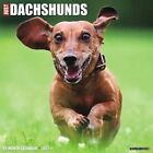 Just Dachshunds 2017 Wall Calendar (dog Breed Calendars) by Willow Creek Press