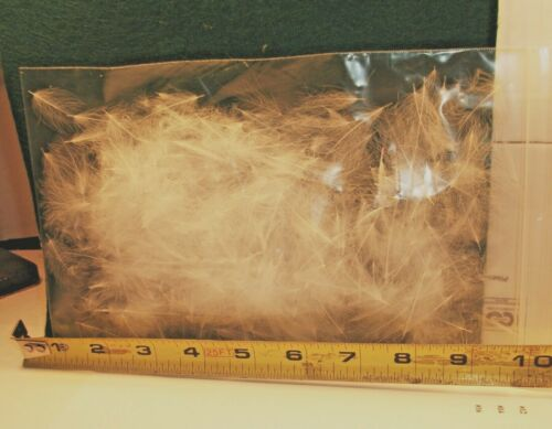 COLOR ; { WHITE } CDC FEATHER 2 GRAM BAG 4-500 FEATHERS