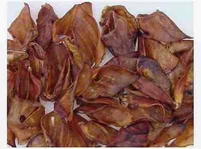 1 Net of Quality ENGLISH Pigs Ears, (50 in total)  FROM THE UK's No 1!!!!!