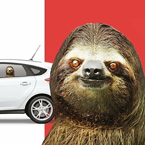 Thumbs Up rw SlthlhdRide With A SlothWindow StickerSloth,