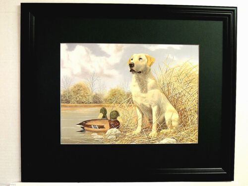 GOLDEN LAB DOG PICTURE LABRADOR RETRIEVER DUCK DECOY HUNTING MATTED FRAMED 16X20