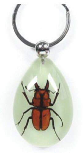 Real Insect Key Ring Chain Lucky Charm GLOW Scorpion Beetle Hornet Bug
