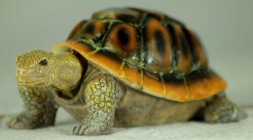 TURTLE NODDING TORTOISE ICONIC GIFT MOVING HEAD TERRARIUM ORNAMENT