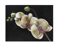 3 D Plüsch Wandtattoo Wandstickers Wanddeko Orchideen Wandaufkleber Sdh-2008