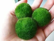 Luffy 3 Giant Living Marimo Moss Balls (~2 Inches) Live Cladophora Aquarium Aqua