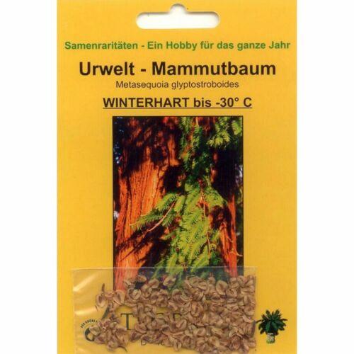 Metasequoia glyptostroboides BONSAI URWELT MAMMUT albero 100 semi V 90040