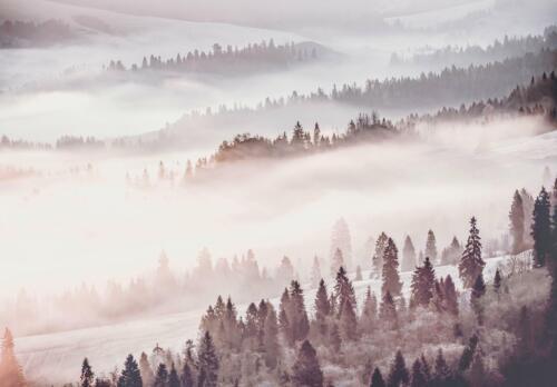 Fototapete Tapete Poster 248616FW Wald im Nebel Landschaft,Natur Blumen Wald
