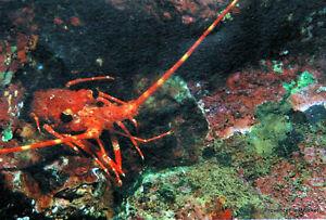 Yt 277 Crustaces Langouste De Tahiti PolynÉsie FranÇaise Fdc 1° Jour Pure Blancheur