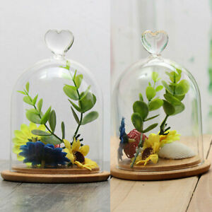 Details About Decorative Glass Dome With Wooden Base Cloche Bell Jar Display Valentine Hot