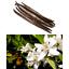 miniatura 6 - Ricarica Profumatore a bastoncino per ambiente di casa,Diffusore di Profumo.