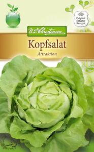 Kopfsalat-039-Attraktion-039-Lactuca-sativa-Salat-ca-200-Samen-4188