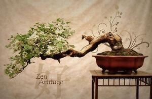 Framed Print Bonsai Tree Picture Poster Zen Meditation Buddha